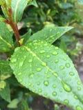 宏观的雨珠 免版税库存图片