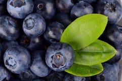 宏观看法小组新鲜的蓝莓有叶子背景 免版税库存图片