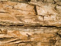 宏观纹理-木头-树皮 免版税库存照片