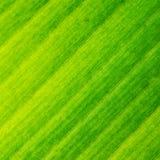 宏观纹理结构绿色叶子 免版税库存图片