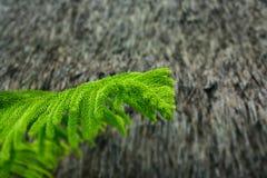 宏观绿色叶子 库存照片