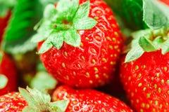 宏观草莓在一个白色碗关闭  图库摄影