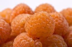 宏观莓黄色 库存照片