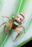 宏观蜘蛛 免版税库存照片