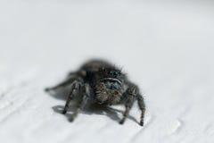 宏观蜘蛛 免版税图库摄影