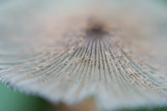 宏观观点的蘑菇 库存照片