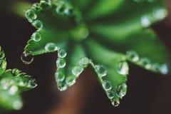 宏观软的绿色花 免版税图库摄影