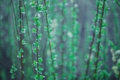宏观软的绿色花 免版税库存图片
