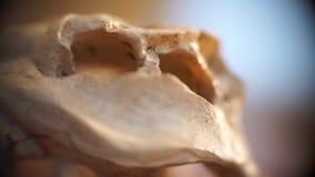 宏观鳄鱼骨头 影视素材