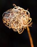 宏观死的植物 库存照片