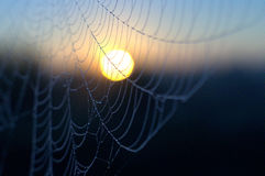 宏观spiderweb 图库摄影