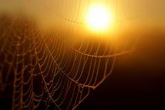 宏观spiderweb 库存照片