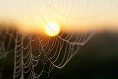 宏观spiderweb 免版税库存图片