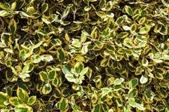 绿宝石和金纺锤 免版税库存图片