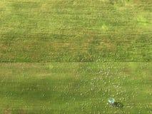 实践领域在高尔夫球学校 免版税库存照片