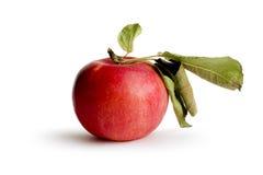 实际的苹果 免版税库存图片