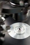实验室样品在显微镜下 免版税库存图片