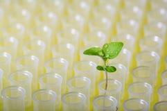 实验室管的新的植物 库存照片