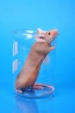 实验室鼠标 图库摄影