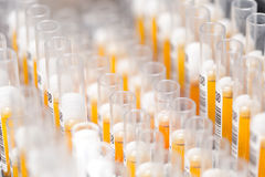 实验室玻璃试管用一个实验的橙色液体填装了在科学研究实验室 库存照片
