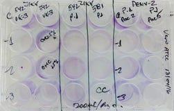 实验板材孵化病毒被传染的细胞 免版税库存图片