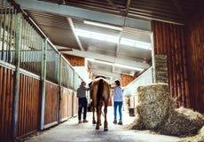 宠爱一匹马的资深夫妇一个背面图在槽枥 库存照片