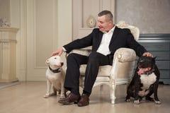 宠爱两条狗的人狗所有者 黑美洲叭喇或staphorshire狗和白色bulterrier在葡萄酒内部 狗 库存图片