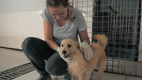 宠爱在宠物避难所的少女特写镜头笼中的流浪狗 r 股票录像