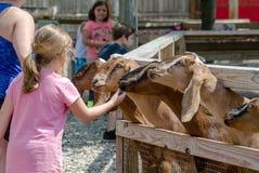 宠爱山羊的女孩在一个动物园 图库摄影