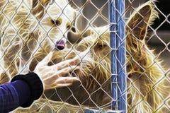 宠爱流浪狗的妇女 皇族释放例证
