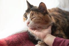 宠爱猫的婴孩 儿童的手冲程和接触睡觉猫 ?? 免版税库存照片