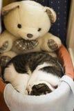 宠爱猫 免版税库存照片