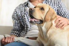 宠爱他的在沙发的人狗 免版税库存照片