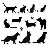 宠物传染媒介剪影  图库摄影