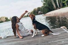 宠物使用 免版税库存图片