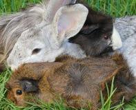 宠物兔子和试验品 免版税库存照片