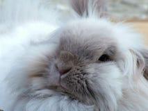 宠物兔子在庭院里 库存照片