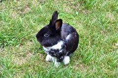 宠物兔宝宝在庭院里 免版税库存照片