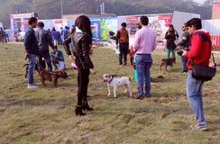 宠物公平联邦机关的狗 免版税库存照片