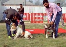 宠物公平联邦机关的狗 图库摄影