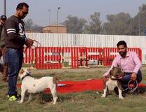 宠物公平联邦机关的狗 免版税库存图片