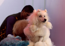 宠物公平联邦机关的狗 库存照片