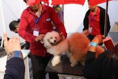 宠物公平联邦机关的狗 免版税图库摄影