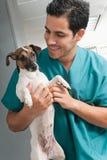 宠物兽医采取的关心  免版税库存图片