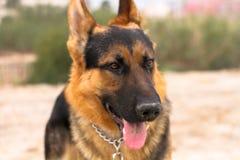 宠物和花 免版税库存照片