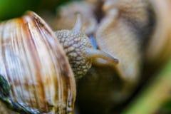 宠物商店的背景蜗牛 库存照片