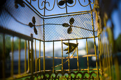 宠物在笼子的鸟透视 免版税图库摄影