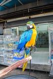 从宠物店的五颜六色的鹦鹉 免版税图库摄影