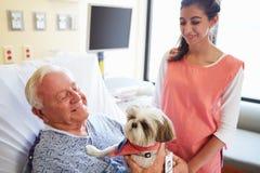 宠物拜访资深男性患者的疗法狗在医院 免版税库存图片