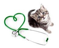 宠物概念的兽医 免版税库存图片